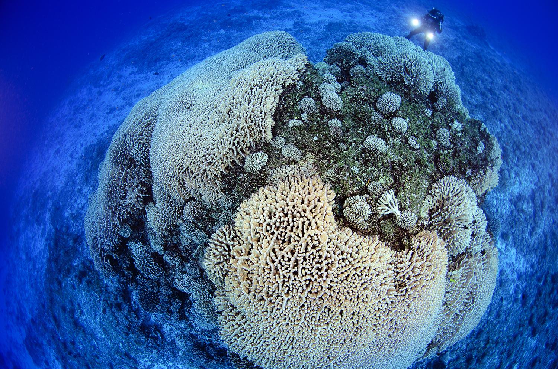 1-Credit-Enric-Sala-slash-National-Geographic-139506181525